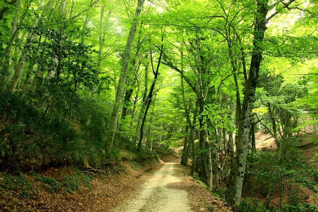 Risultati immagini per foresta umbra